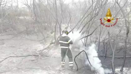 """Incendi in Sardegna, WWF contro la negligenza dell'uomo: """"Non chiamatela calamità"""""""