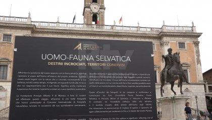 Dal Principato di Monaco a San Marino, ecco la mostra della Fondazione Principe Alberto