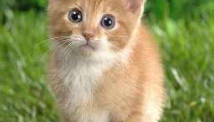 Semplicemente gatto